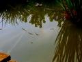 Melléknap tükrörődése a kerti tó vizén.